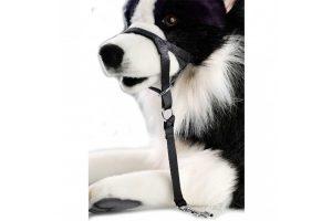 De D&D Dog Control is een zeer stevige nylon muilband voor honden. Dit tuigje ondersteunt een rustige wandeling met uw hond, doordat het tuigje over de neus loopt.