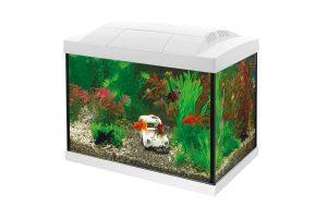 De Superfish Aqua 20 Goldfish Kit Aquarium is een starterkit met energiezuinige LED-verlichting. Ook heeft het aquarium een binnenfilter en handige accessoires om de aquariumhobby te starten. Het aquariumdeksel heeft een klepje om het voeren van de vissen gemakkelijk te maken. Het heldere witte licht is perfect voor plantengroei.