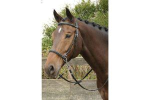 Harry's Horse hoofdstel bitloos kaakgekruist heeft onderlegde front- en neusriem. Het hoofdstel heeft webband teugels met stops. De teugelvoering loopt kruislings via de kin en de nek.