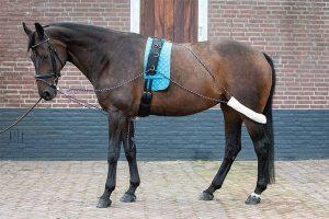 De longeerhulpteugel is een revolutionair trainingsmiddel voor paarden. Het zorgt ervoor dat de rug sterkt, wanneer de bovenlijn van het paard recht is en dringt het paard voorzichtig aan om correct te lopen.