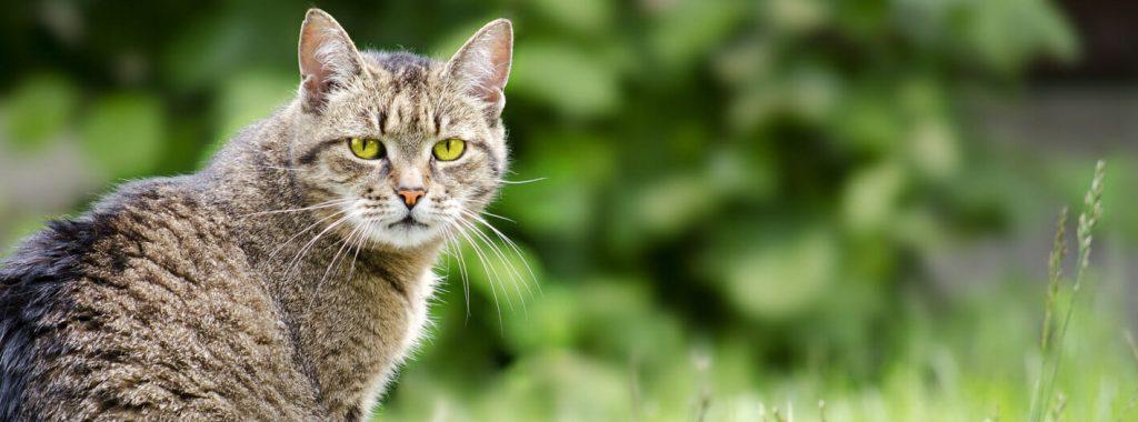 Biologisch afbreekbaar kattengrit