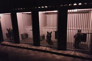 Maatwerk hondenkennel hoog model vierdubbel