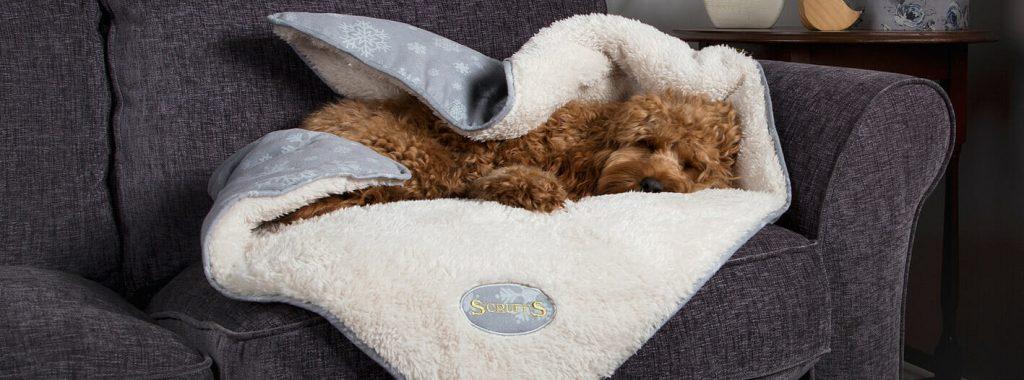 Kan een hond dromen?