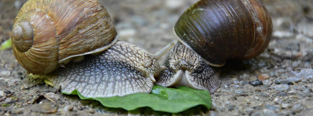 5 tips tegen slakkenvraat in de tuin