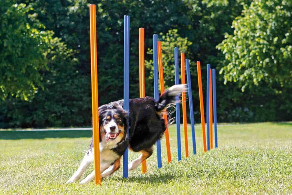 Agility training met uw hond!