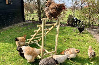 De kippenschommel is een stevige schommel uit eigen productie gemaakt van hout. Daarnaast is de schommel voorzien van een trappetje waarop de kippen kunnen gaan zitten. De kippenschommel is eenvoudig te plaatsen in elke bestaand kippenverblijf!