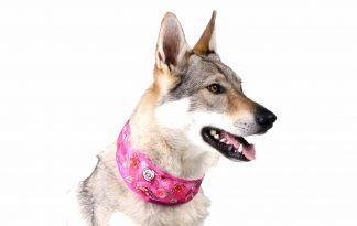 De Aqua Coolkeeper Collar is speciaal bedoeld om dieren comfortabel koel te houden bij warme temperaturen.