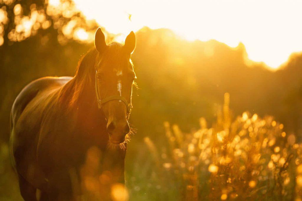 Verlichting bij koliek en gasophoping bij paarden