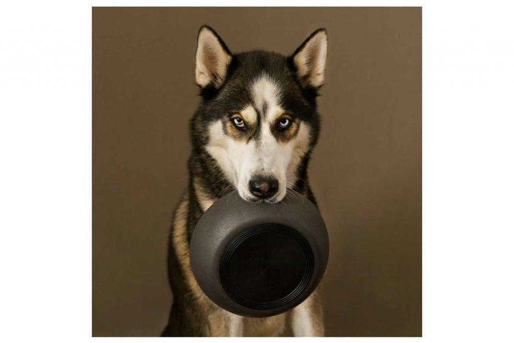 De District 70 Bamboo honden voerbak is een stijlvolle bak voor uw trouwe viervoeter die zeker in de smaak zal vallen. De voerbak is verkrijgbaar in verschillende maten, zodoende is er altijd een voerbak geschikt voor uw hond.