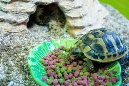 Het Happy Pet voerbakje Leaf is zeer geschikt om te plaatsen in uw terrarium. Voorzien van een leuke uitstraling, die je doet denken aan een blaadje. Kan gebruikt worden voor kleine brokjes of lekkernijen voor uw huisdier.