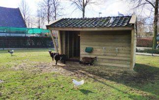 Maatwerk veestal kinderboerderij model, voorzien van schuin dak