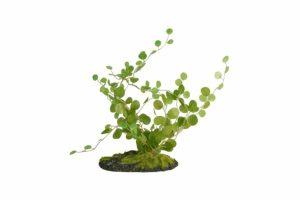 De ZooMed Button Fern is een plantje gemaakt van kunststof waarmee u een ware jungle kunt creëren voor uw reptiel. Door middel van de kunstplanten van ZooMed kunt u een zo natuurlijk mogelijke leefomgeving realiseren.