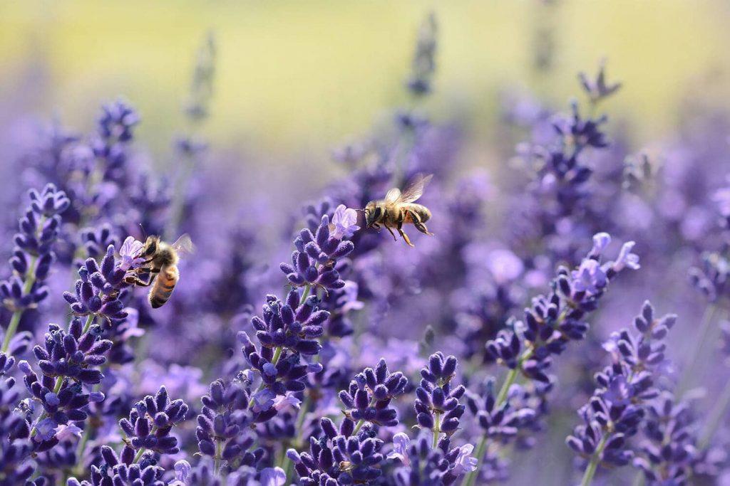 Waarom een insectenhotel niet mag ontbreken in jouw tuin!