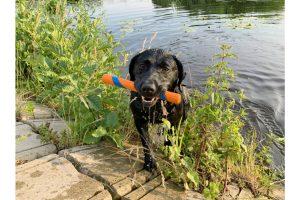 De ChuckIt Ultra Fetch Stick zorgt voor leuke interactieve spelletjes samen met uw hond. De hoge kwaliteit van het materiaal zorgt voor een duurzaam product, dat tevens ook nog eens zacht is voor het hondengebit.