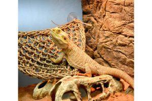De Relaxer van Terra Della is een hangmat voor klimmende terrariumdieren. De hangmat is gemaakt van 100% natuurlijk zeegras.