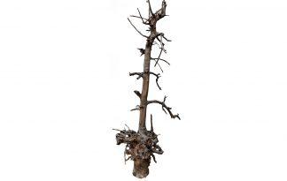 De Klimboom 001 is een gemaakt van gestraald fruitboom hout. Papegaaien en andere kromsnavels zijn gek op klimbomen, omdat ze kunnen klimmen en klauteren.