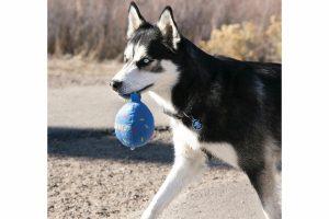 Verwen jouw hond met een leuk verjaardagscadeau! Het Kong Birthday Balloon hondenspeeltje is voorzien van een lang touw, piep geluidjes en een zachte ''ballon''. Zeer geschikt om te gebruiken tijdens apporteerspelletjes, zodat jouw hond gezond en fit blijft.