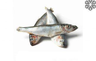 De Diepvries Haring is eenvoudig in kleine porties te ontdooien, zodat je geen eten verspilt. Daarnaast is de vis van klein formaat, zo'n 7 tot 15 centimeter. Houd altijd rekening met een schone werkplek en hygiëne wanneer u werkt met rauw diervoer.