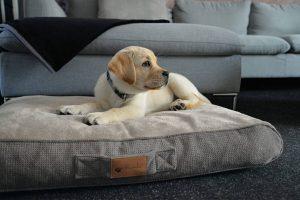 Het Petlando Verona Orthopedisch hondenkussen is gemaakt van hoogwaardig materiaal en zorgt voor optimale ondersteuning bij jouw trouwe viervoeter. De vulling zorgt ervoor dat alle spieren en gewrichten ontlast worden tijdens het liggen, waardoor dit kussen zeer geschikt is voor alle honden.
