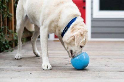 De meervoudig bekroonde Orbee Tuff Snoop van Planet Dog daagt de hersenen uit op leuke en stimulerende manieren! Gemakkelijk te vullen.