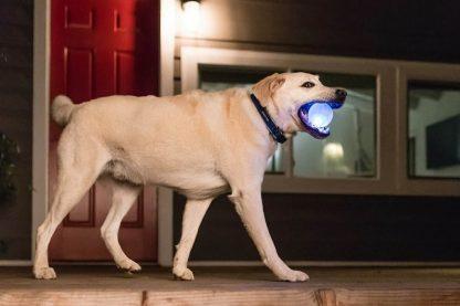 De Planet Dog Orbee Tuff LED Strobe hondenbal maakt apporteren nog leuker! De bal is voorzien van een LED-lampje en deze begint te knipperen wanneer de bal laat stuiteren.