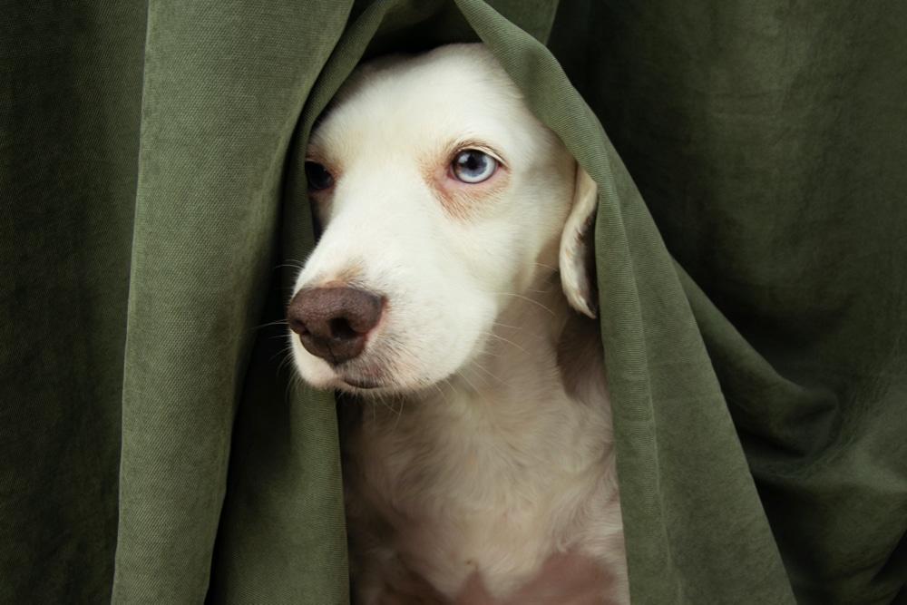 5 tips voor een fijne oud en nieuw samen met jouw hond!