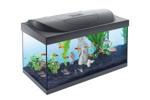 Het Tetra Starter Line LED aquarium is zeer geschikt voor iedereen die wil beginnen met deze fantastische hobby! De set bevat namelijk alles wat je nodig hebt om een goede start te maken met jouw nieuwe aquarium. Daarnaast zorgt de LED verlichting ervoor dat het aquarium mooi helder is.