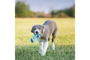 De Kong Goodie Bone Puppy is gemaakt van het unieke puppyrubber dat de instinctieve behoeften bevordert om te kauwen. Daarnaast verlicht het pijn aan het doorkomende gebit en tandvlees. Aan twee kanten voorzien van een speciale opening voor iets lekkers, waardoor het kauwgenot nog groter wordt voor jouw pup!