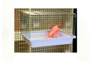 Fauna Babykooi of volièrebad is gemakkelijk aan de kooi te bevestigen. Je kan hem gebruiken als babykooi, maar ook als volièrebad. De onderbak is gemaakt van wit kunststof en is gemakkelijk schoon te houden. Daarnaast zijn de tralies in te klappen, waardoor je hem eenvoudig kan opbergen.