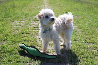 De Happy Pet Gaudy Game fazant is het favoriete speeltje van jachthonden. Door de speciale vulling blijft de fazant goed op het water liggen en is hij daardoor gemakkelijk te pakken door honden. Door de felle kleuren is het speeltje goed zichtbaar.