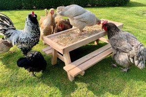 Deze Chicknic-tafel is een unieke picknick tafel speciaal gemaakt voor kippen. Voer je kippen hun favoriete traktaties op deze stevige mini picknicktafel. Het blad is afgewerkt met een randje zodat voer, zaadjes en groenten er niet afvallen.