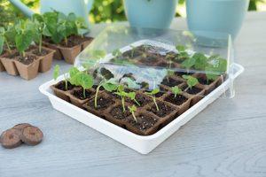 De Sogo Eco kweekkas is ideaal voor het opkweken van zaden en stekjes. De kweekkap is voorzien van een ventilatie opening welke open en dicht kan, daarmee creëer je een optimaal klimaat.