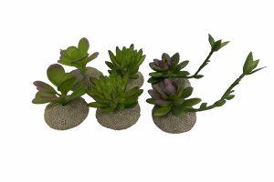 De Terra Della decoratieve terrariumplanten zijn gemaakt van hoogwaardig kunststof en polyesterhars, waardoor ze zeer degelijk zijn. Daarnaast zorgt de stevige voet ervoor dat ze stabiel staan in het terrarium.