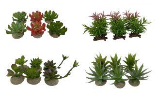 Terra Della decoratieve terrariumplanten