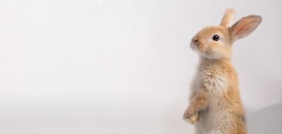 Knaagdieren & konijnen