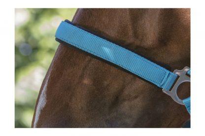 het Norton Fluo onderlegd paardenhalster is voorzien van een verstelbaar kopstuk en neusriem met gespen, waardoor je hem makkelijk passend maakt. Daarnaast is het halster onderlegd met neopreen en daardoor zacht en soepel.