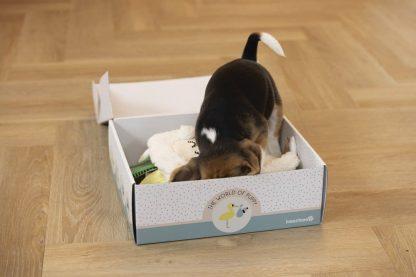 Met het Beeztees Puppy Kraampakket ben je helemaal klaar voor de start. Heb jij of krijg jij binnenkort een pup in huis? Dan staat je een hele spannende en leuke tijd te wachten. Samen met je pup ga je de komende tijd werken aan een super sterke band en aan jou de taak natuurlijk om de pup op te voeden tot een lieve volwassen hond.