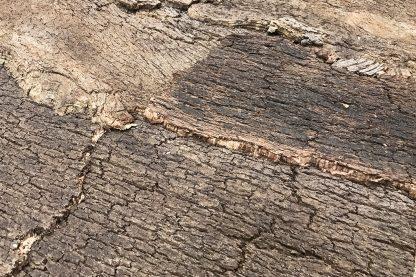 Natuurkurken achterwand jungle donker close-up