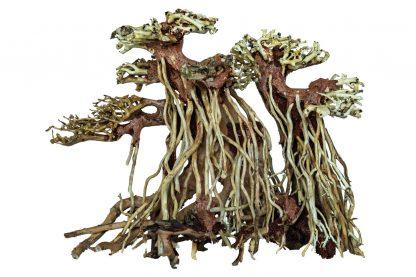 Het Superfish Bonsai Wood is met de hand geselecteerd gemodelleerd hout, dat eruit ziet als een Bonsai boom. Zeer decoratief voor in je aquarium. De decoratie is verkrijgbaar in drie verschillende maten.