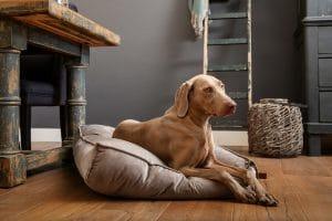 Het Beeztees DBL hondenkussen Nalino is een heerlijke plek voor uw hond, daarnaast past dit kussen ook perfect in ieder interieur.