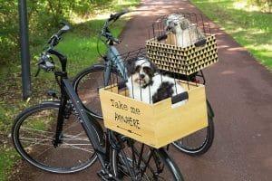 Deze Beeztees fietsmand voor achter op de bagagedrager is voorzien van een fraaie design en inclusief beschermkap.