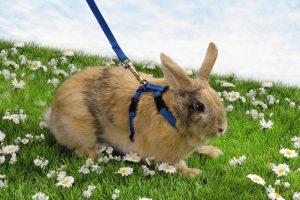 Beeztees konijnentuigje 120 cm