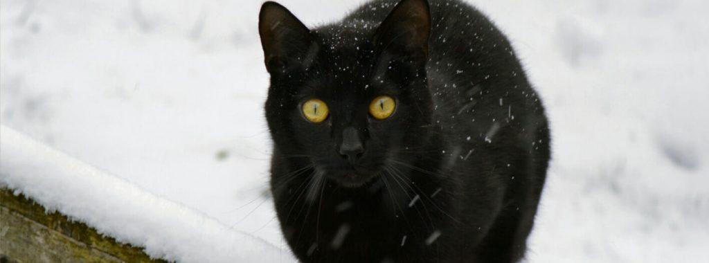 Kat in de winter buiten laten