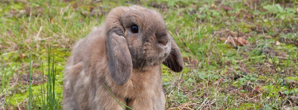 Het konijn in de winter buiten laten