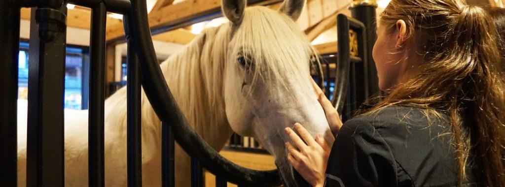 Je paard soepel van weide naar stal overzetten