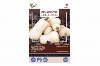 De Buzzy Flespompoen Wintersquash Waltham Butternut heeft een milde smaak en is lang houdbaar.