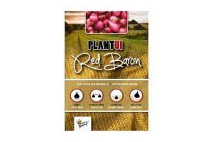 Plantuien Red Baron groeit uit tot een dieprode ui met een vrij sterk aroma.