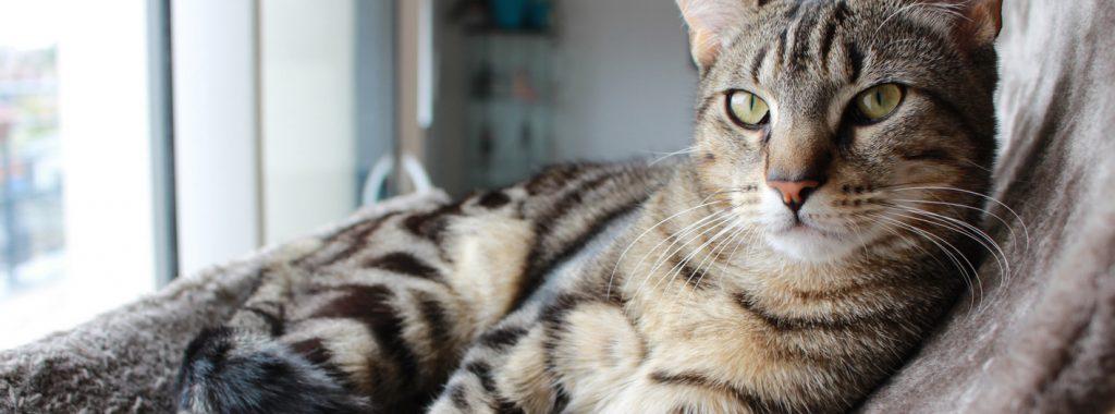 Checklist voor het houden van katten