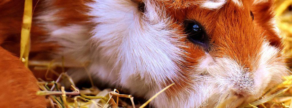 Checklist voor het houden van knaagdieren en konijnen