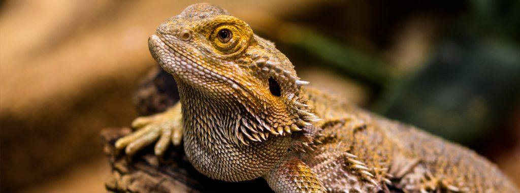 Checklist voor het houden van reptielen en amfibieën